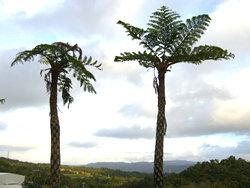 沖縄のヤシの木