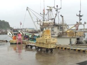 輪島港・底引き網漁再開